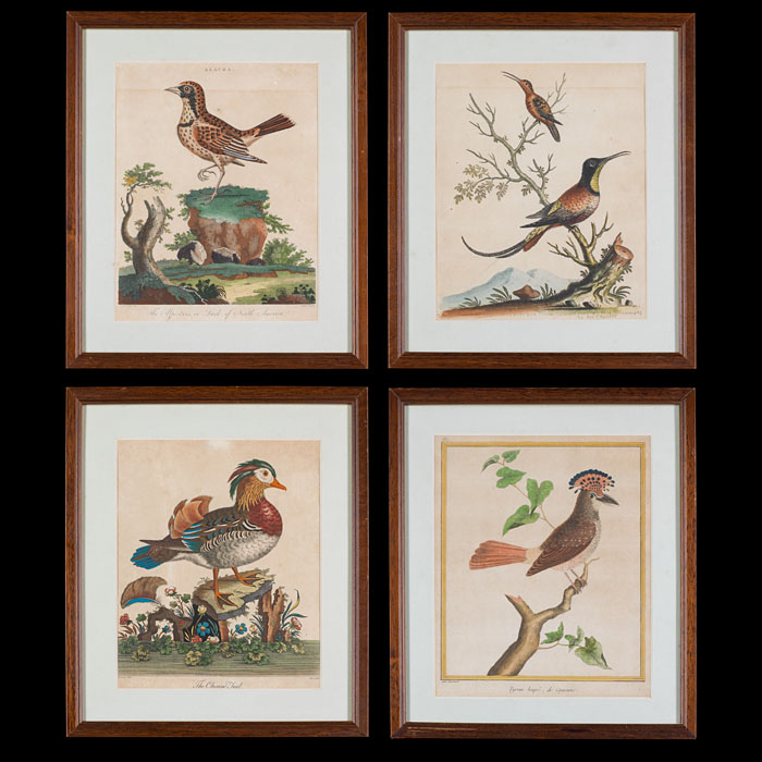 Four 18th Century Hand-colored Bird Prints